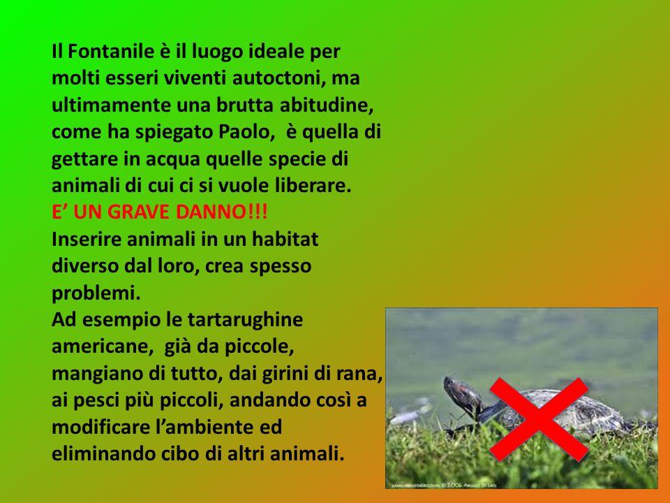 Il Fontanile è il luogo ideale per molti esseri viventi autoctoni, ma ultimamente una brutta abitudine, come ha spiegato Paolo, è quella di gettare in acqua quelle specie di animali di cui ci si vuole liberare.
