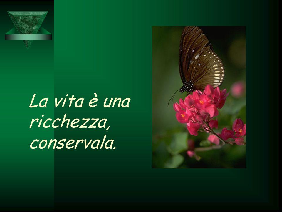 La vita è una ricchezza, conservala.