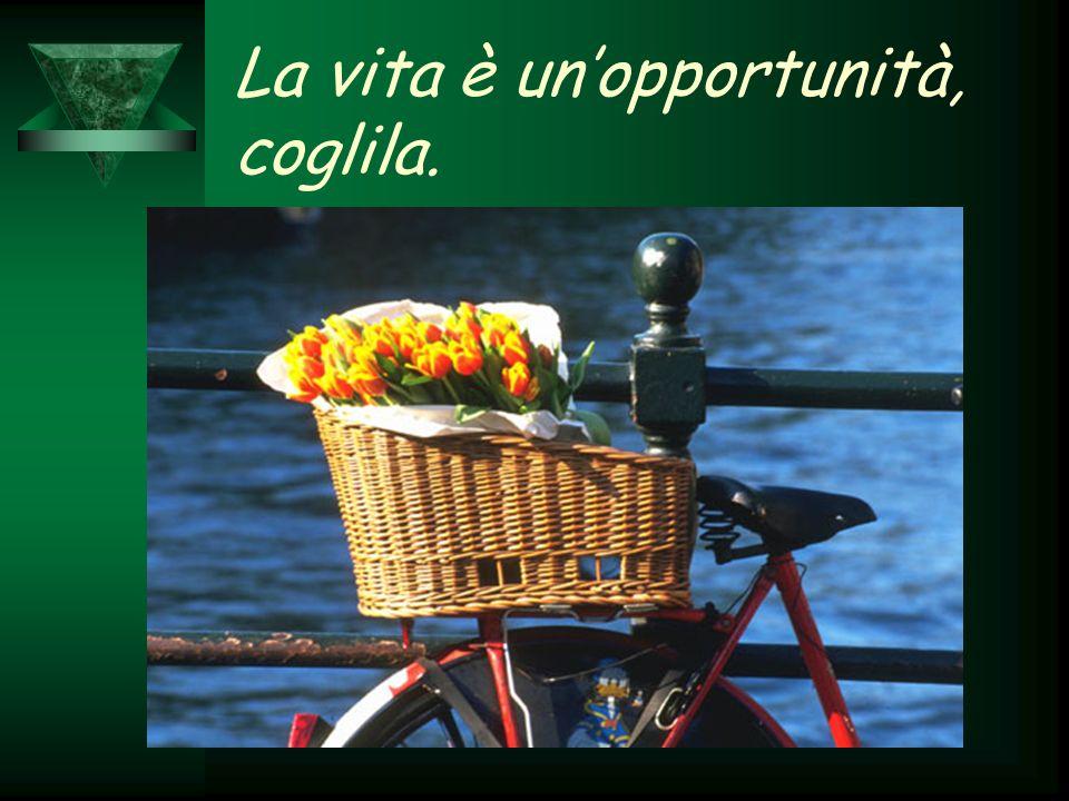 La vita è un'opportunità, coglila.