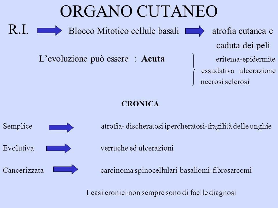 ORGANO CUTANEO R.I. Blocco Mitotico cellule basali atrofia cutanea e