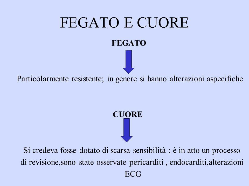 FEGATO E CUORE FEGATO. Particolarmente resistente; in genere si hanno alterazioni aspecifiche. CUORE.