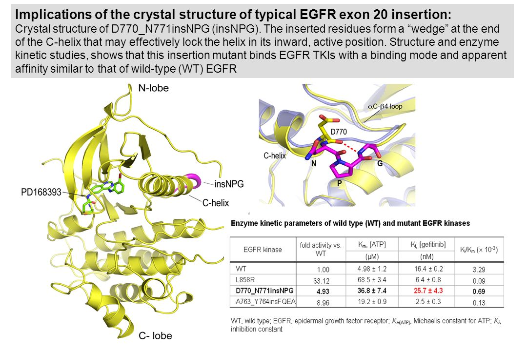 Implications of the crystal structure of typical EGFR exon 20 insertion: