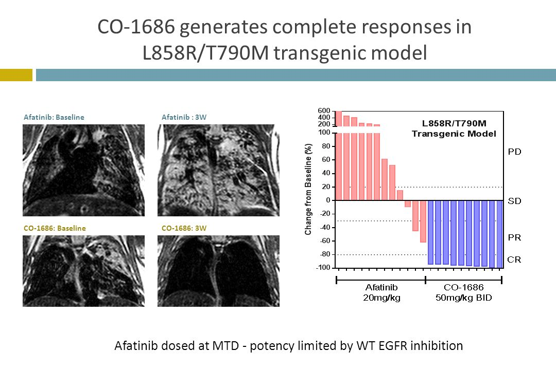 CO-1686 generates complete responses in L858R/T790M transgenic model