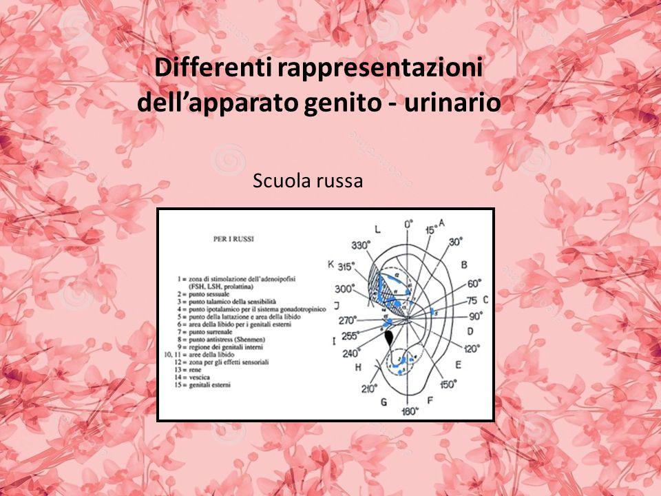 Differenti rappresentazioni dell'apparato genito - urinario