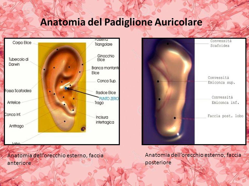 Anatomia del Padiglione Auricolare