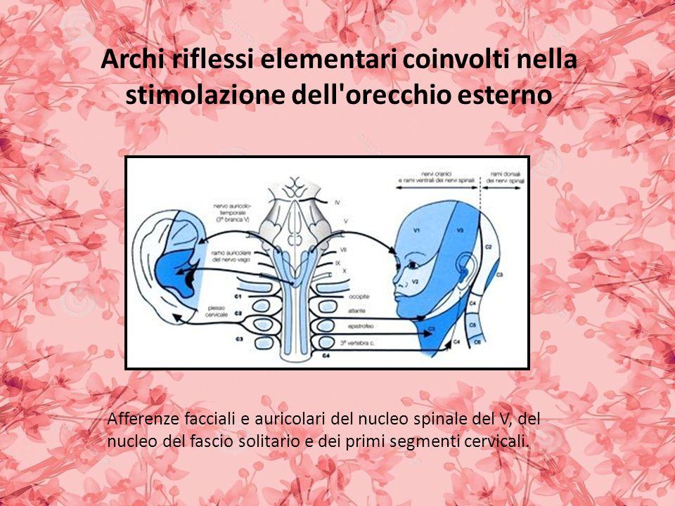 Archi riflessi elementari coinvolti nella stimolazione dell orecchio esterno