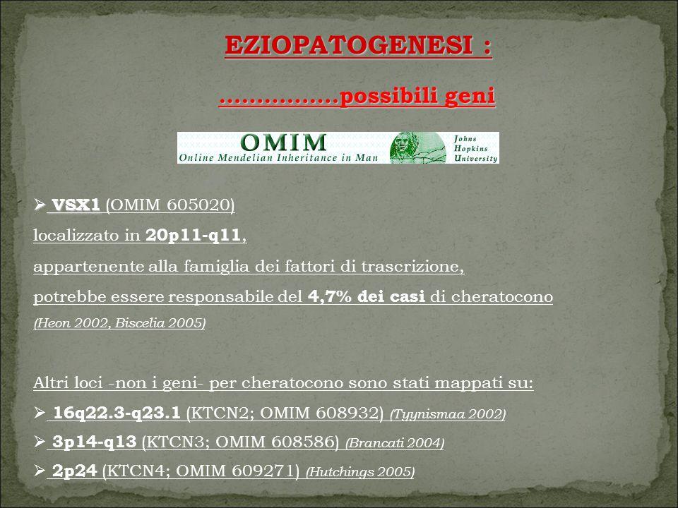 EZIOPATOGENESI : …………….possibili geni VSX1 (OMIM 605020)