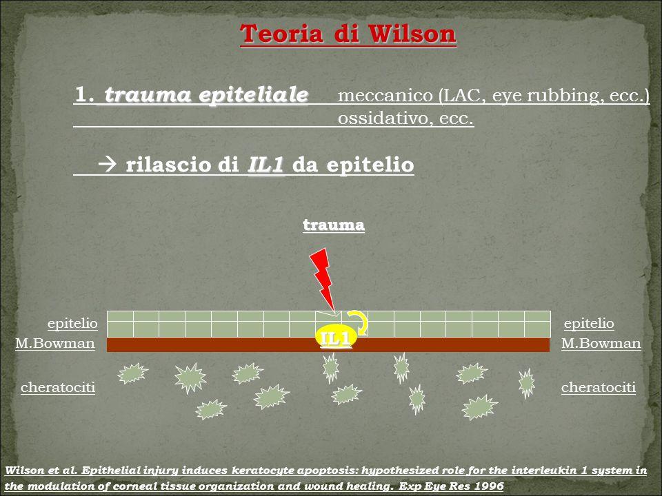 Teoria di Wilson 1. trauma epiteliale meccanico (LAC, eye rubbing, ecc.) ossidativo, ecc.  rilascio di IL1 da epitelio.
