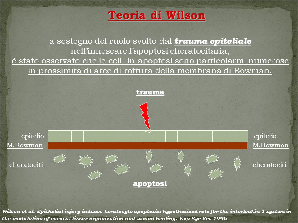 Teoria di Wilson a sostegno del ruolo svolto dal trauma epiteliale