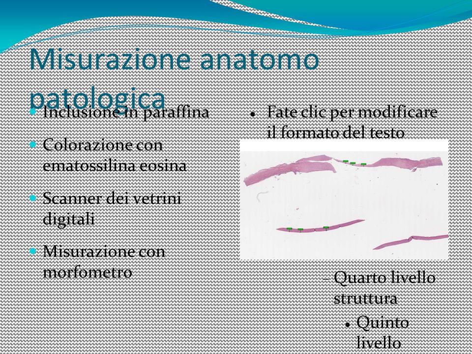 Misurazione anatomo patologica