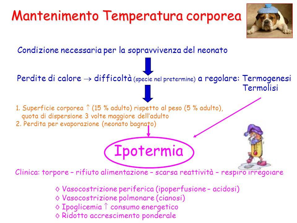 Ipotermia Mantenimento Temperatura corporea