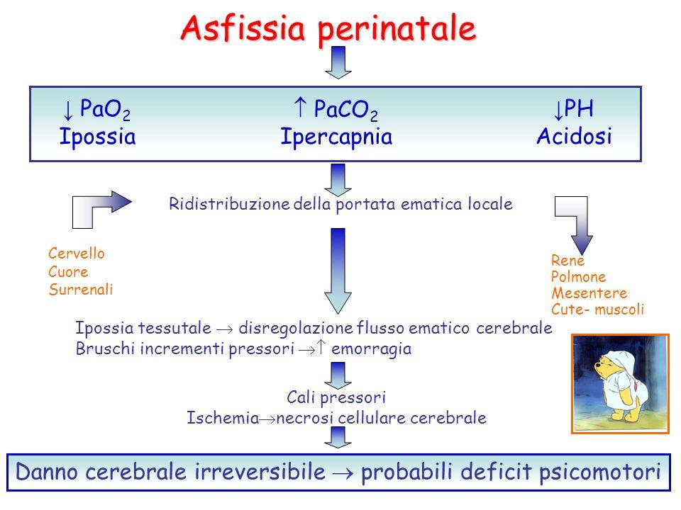 Asfissia perinatale ↓ PaO2 Ipossia  PaCO2 Ipercapnia ↓PH Acidosi