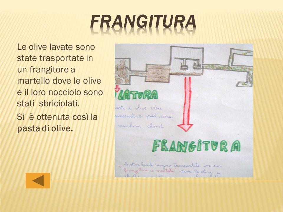 frangitura Le olive lavate sono state trasportate in un frangitore a martello dove le olive e il loro nocciolo sono stati sbriciolati.