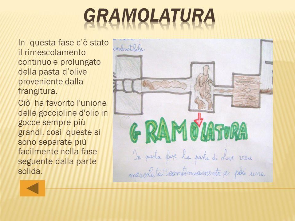 gramolatura In questa fase c'è stato il rimescolamento continuo e prolungato della pasta d'olive proveniente dalla frangitura.