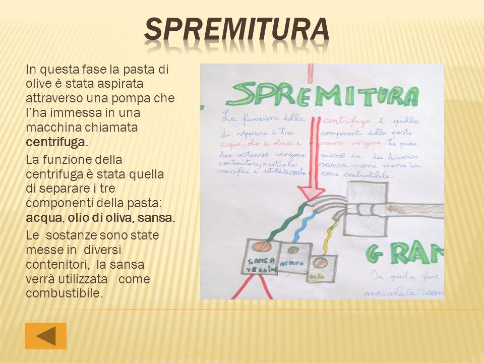 spremitura In questa fase la pasta di olive è stata aspirata attraverso una pompa che l'ha immessa in una macchina chiamata centrifuga.