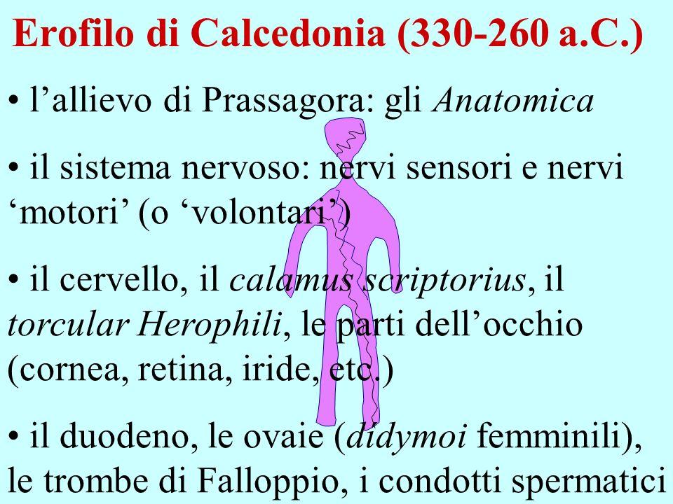 Erofilo di Calcedonia (330-260 a.C.)