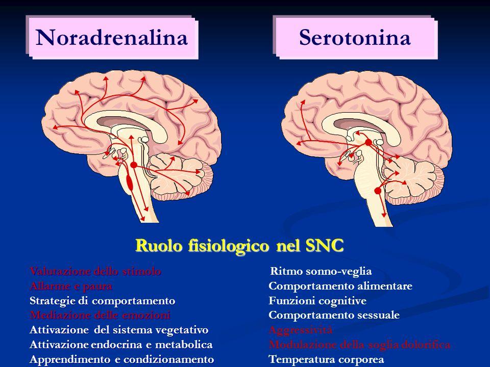 Ruolo fisiologico nel SNC