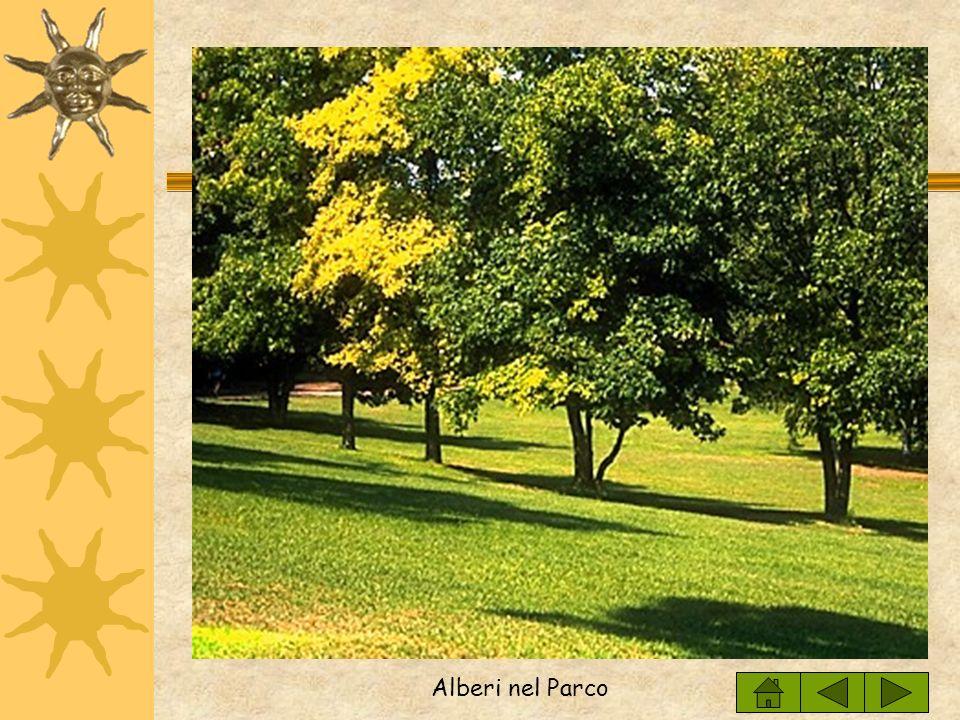 Alberi nel Parco