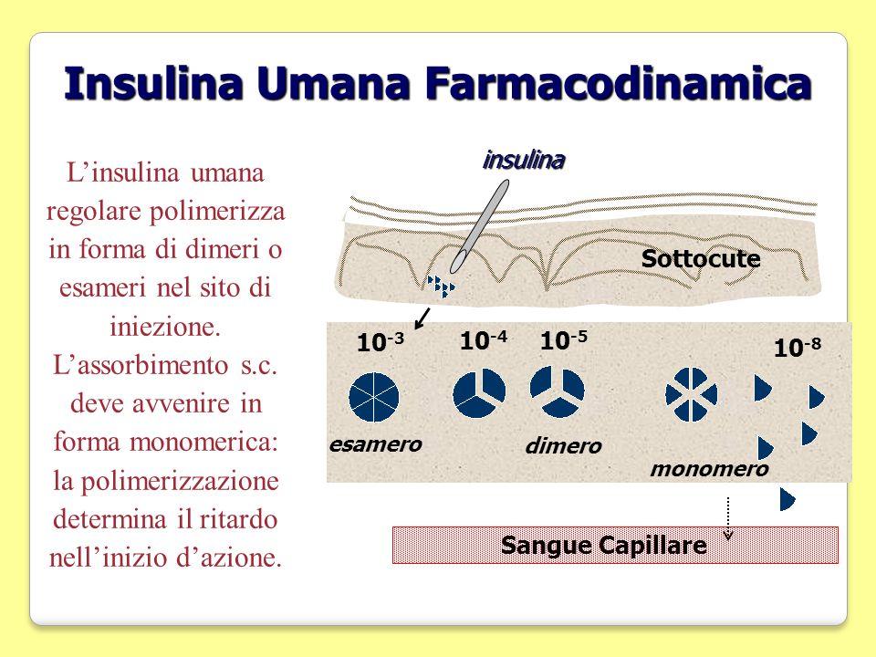 Insulina Umana Farmacodinamica