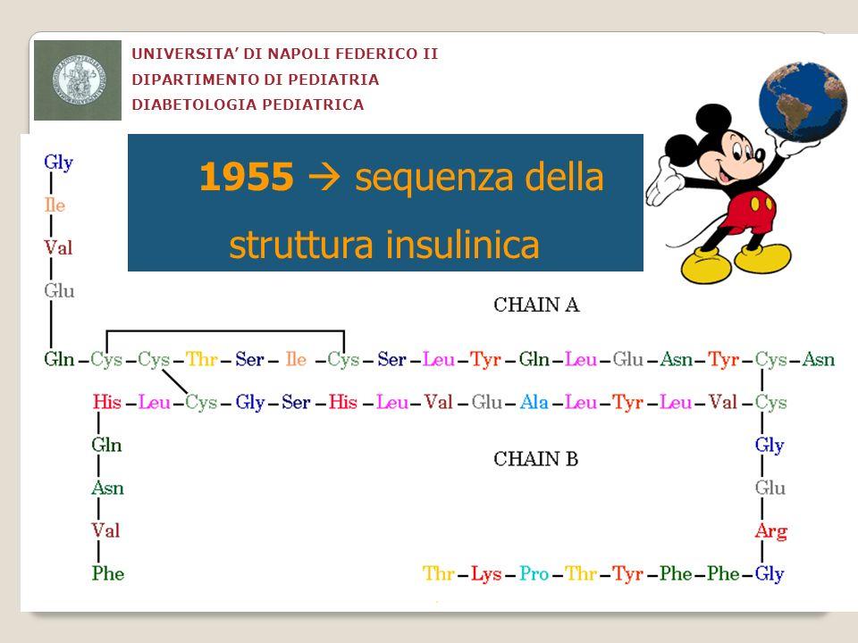 1955  sequenza della struttura insulinica