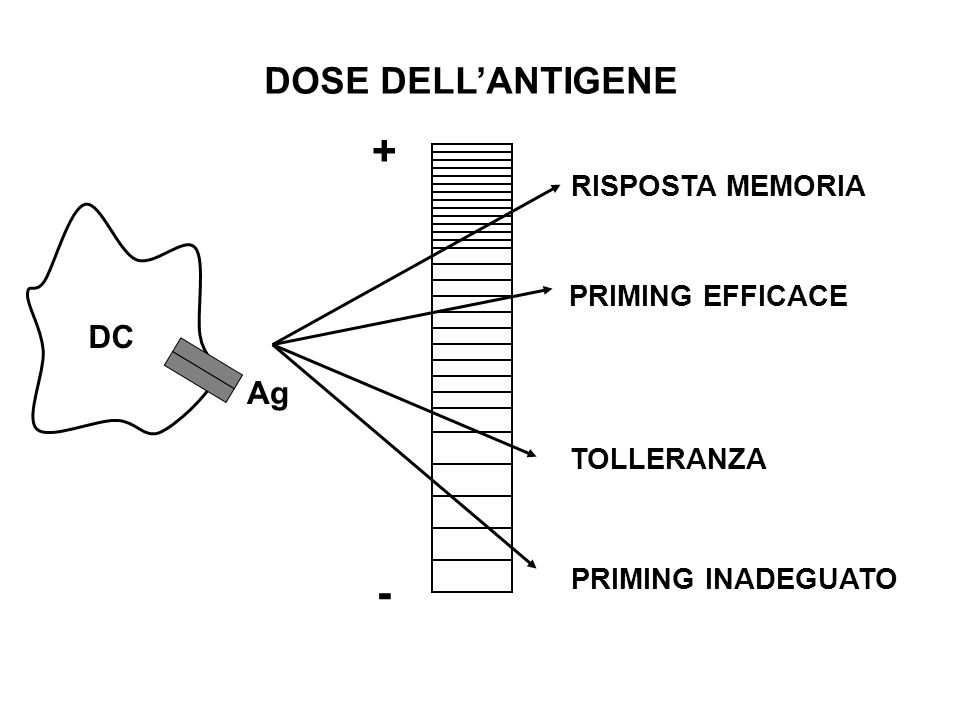+ - DOSE DELL'ANTIGENE DC Ag RISPOSTA MEMORIA PRIMING EFFICACE
