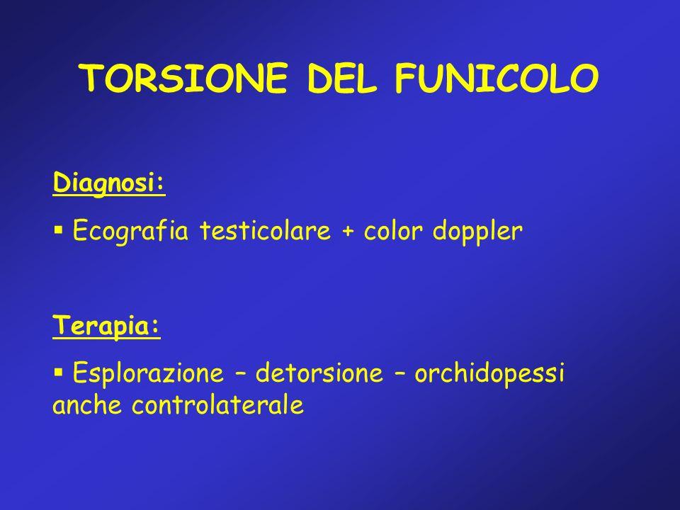 TORSIONE DEL FUNICOLO Diagnosi: Ecografia testicolare + color doppler