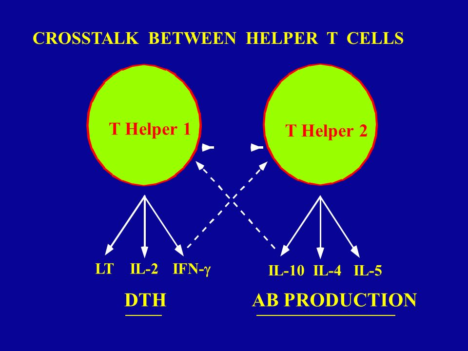 DTH AB PRODUCTION T Helper 1 T Helper 2