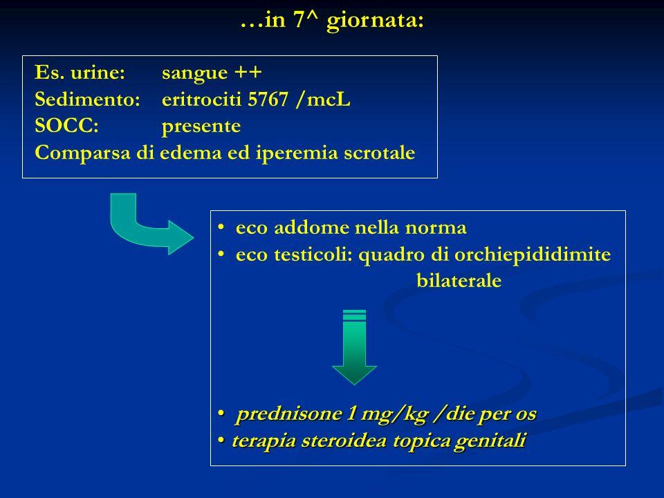 …in 7^ giornata: Es. urine: sangue ++ Sedimento: eritrociti 5767 /mcL