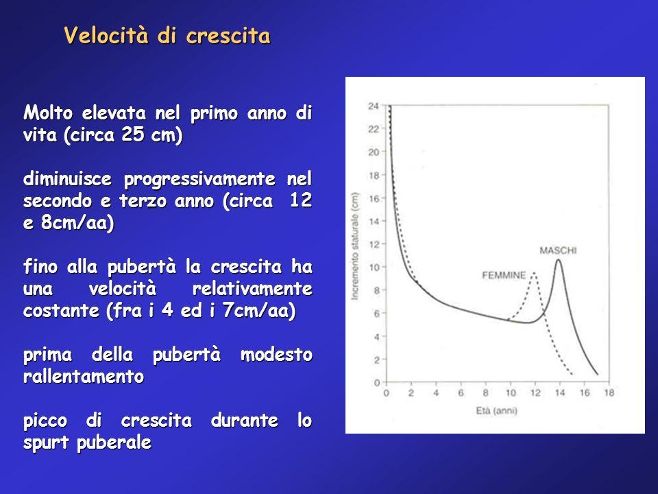 Velocità di crescita Molto elevata nel primo anno di vita (circa 25 cm) diminuisce progressivamente nel secondo e terzo anno (circa 12 e 8cm/aa)