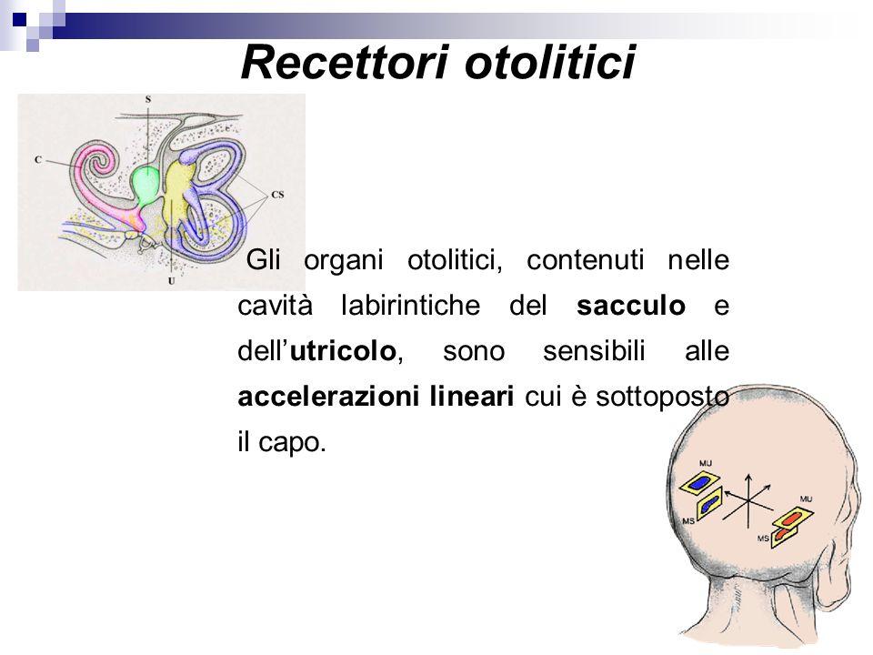 Recettori otolitici