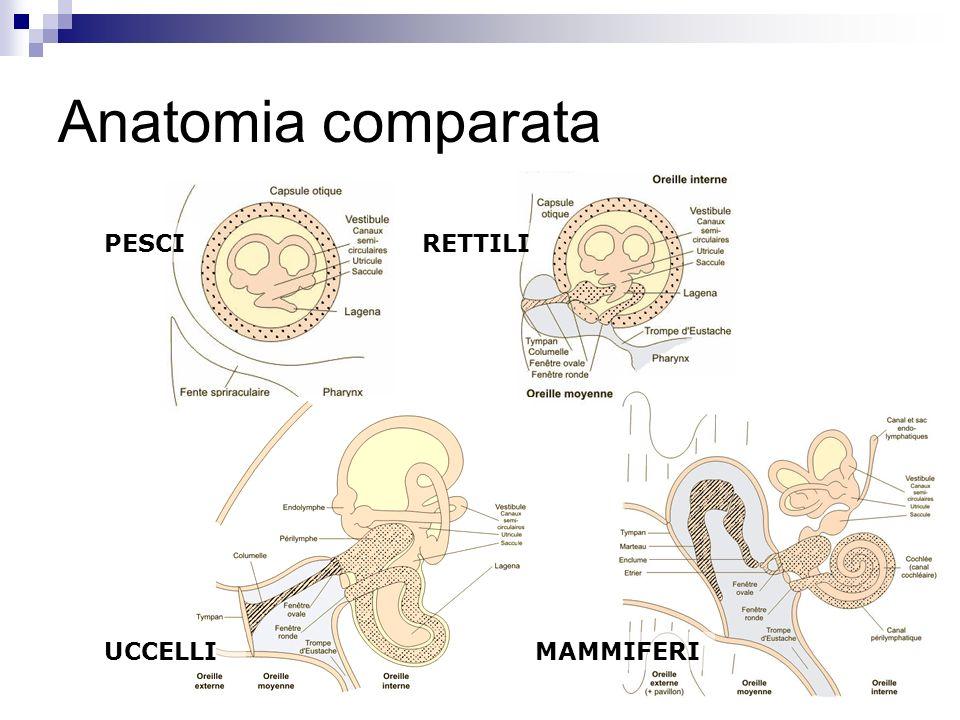 Anatomia comparata PESCI RETTILI UCCELLI MAMMIFERI