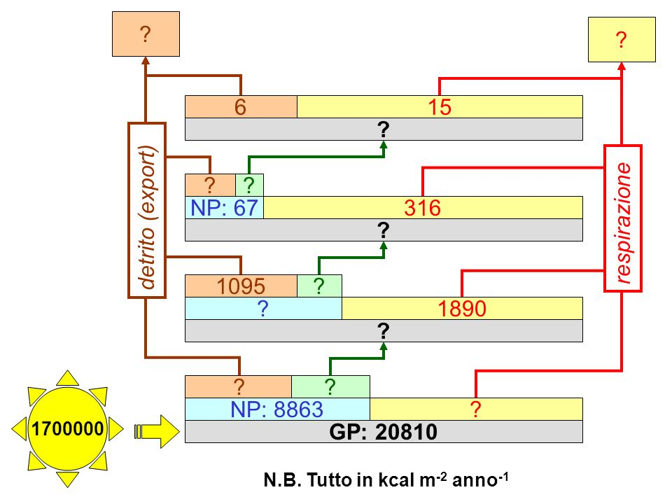 N.B. Tutto in kcal m-2 anno-1