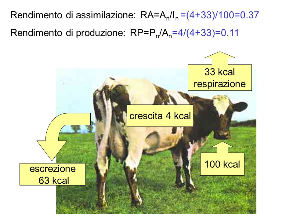 Rendimento di assimilazione: RA=An/In =(4+33)/100=0.37