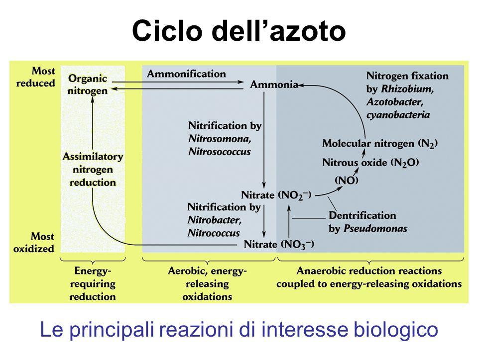 Le principali reazioni di interesse biologico