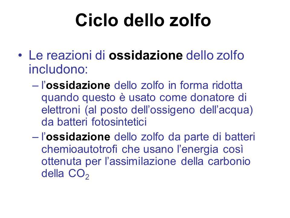 Ciclo dello zolfo Le reazioni di ossidazione dello zolfo includono: