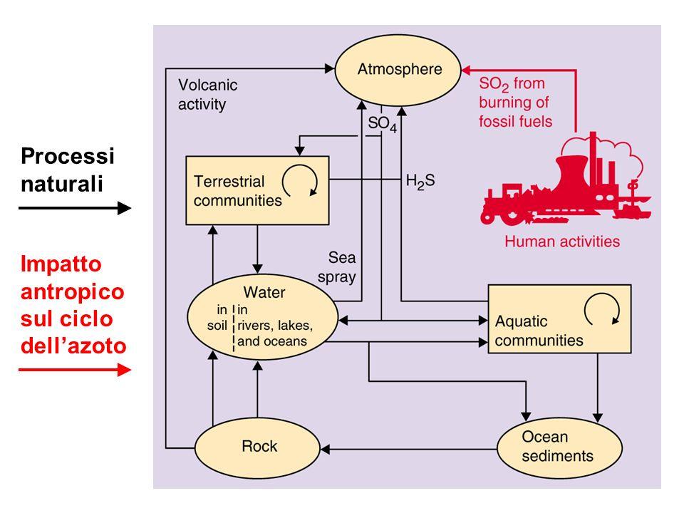 Processi naturali Impatto antropico sul ciclo dell'azoto