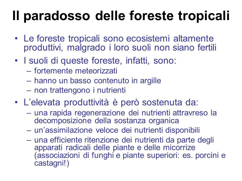 Il paradosso delle foreste tropicali