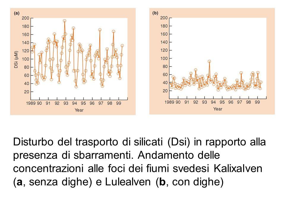 Disturbo del trasporto di silicati (Dsi) in rapporto alla presenza di sbarramenti.