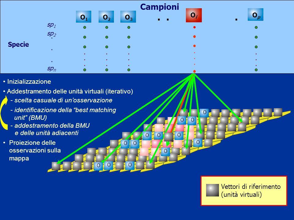 . . . Campioni Oi Op O1 O2 O3 Specie sp1 sp2 spn Inizializzazione