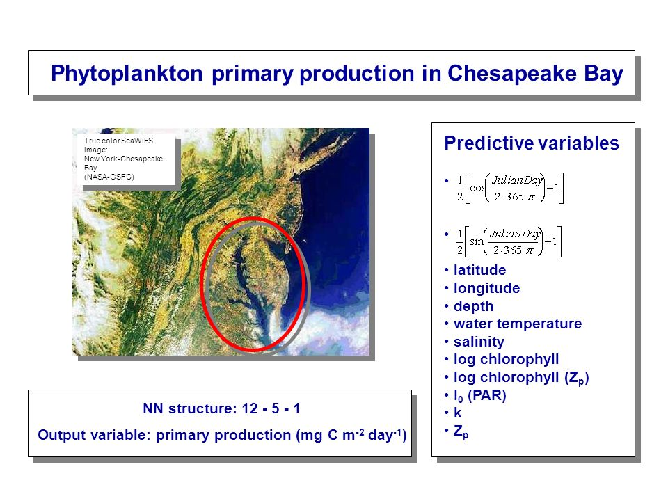 Phytoplankton primary production in Chesapeake Bay