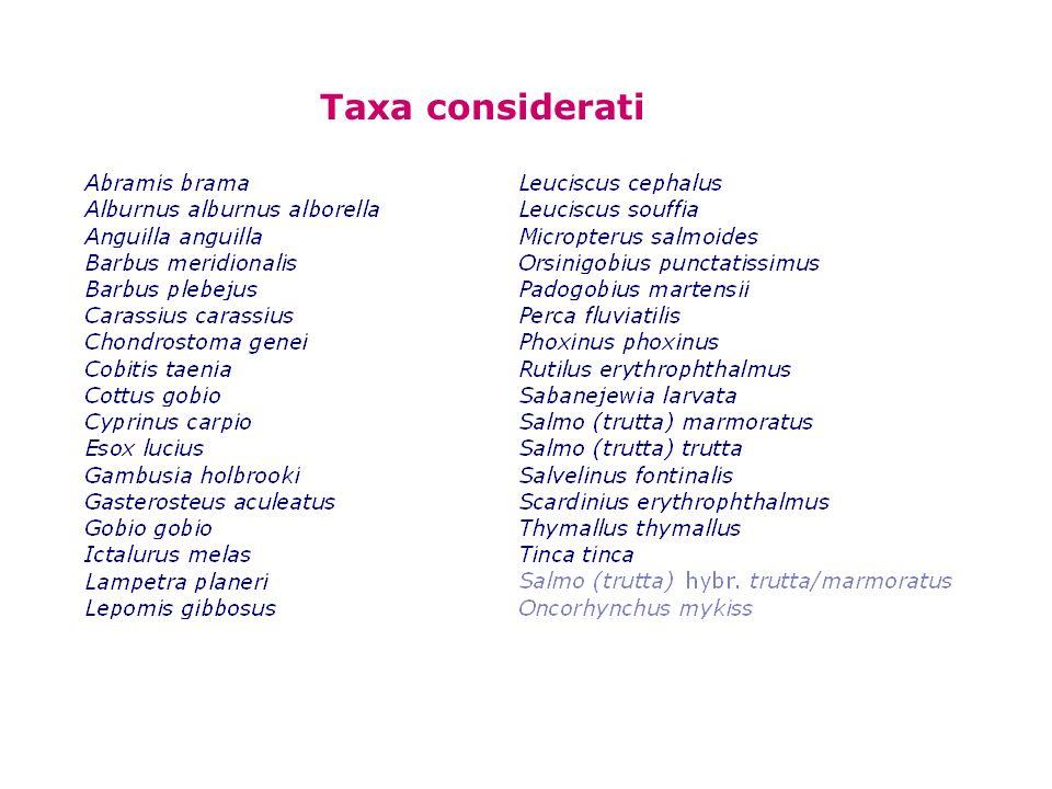 Taxa considerati
