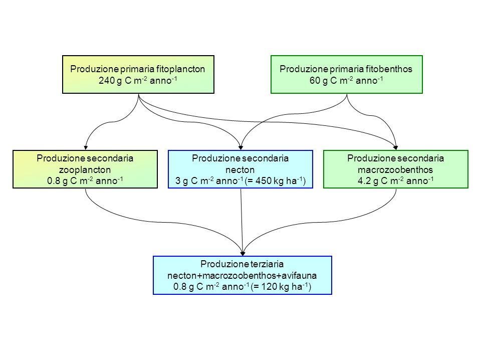Produzione primaria fitoplancton 240 g C m‑2 anno‑1