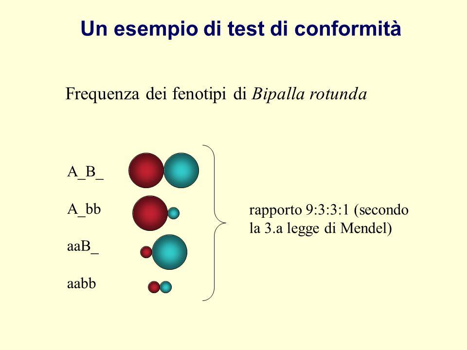 Un esempio di test di conformità
