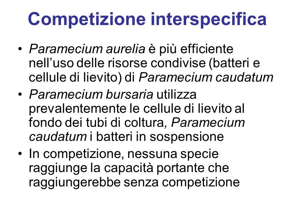 Competizione interspecifica