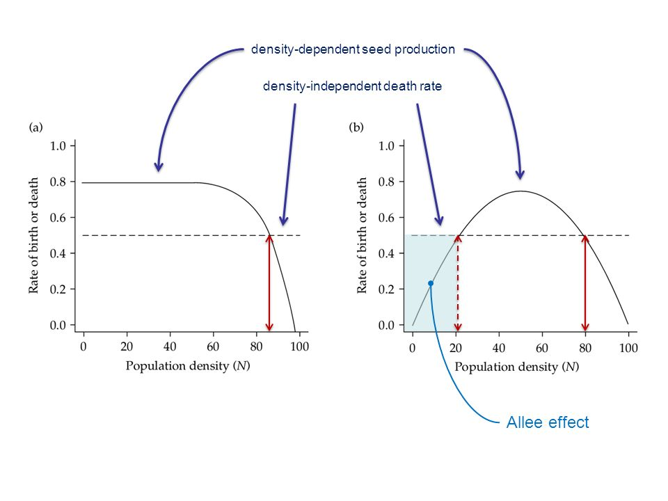 Allee effect density-dependent seed production