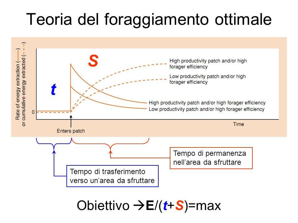 Teoria del foraggiamento ottimale