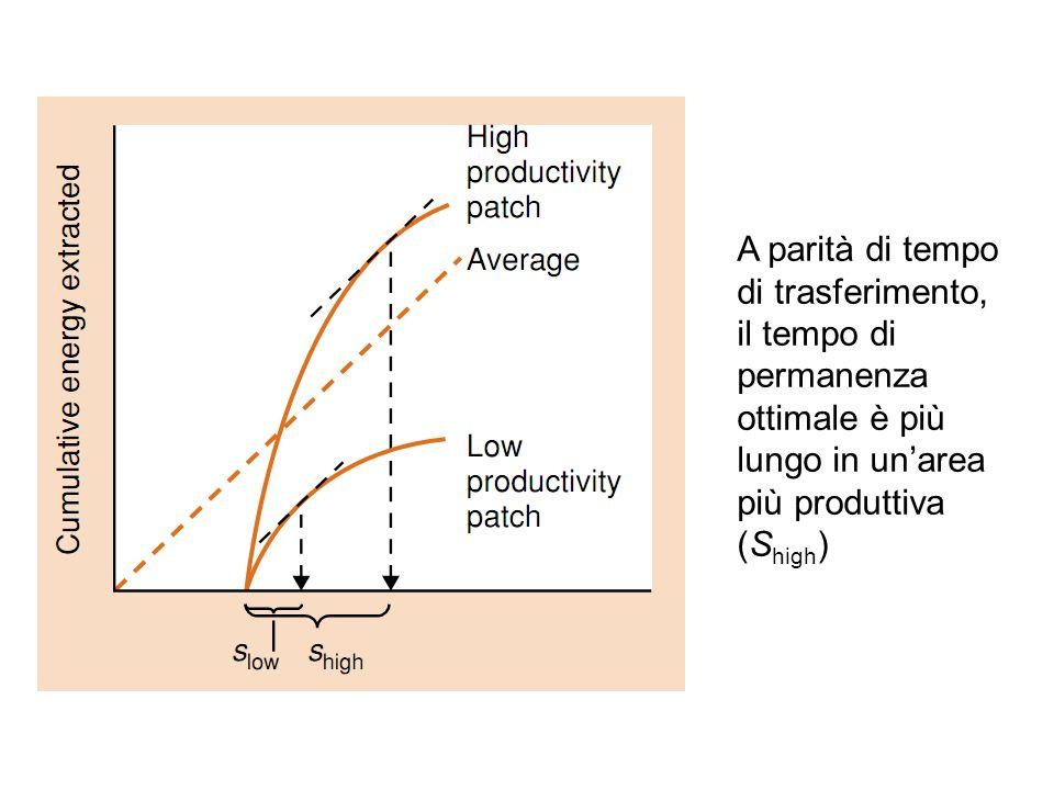 A parità di tempo di trasferimento, il tempo di permanenza ottimale è più lungo in un'area più produttiva (Shigh)