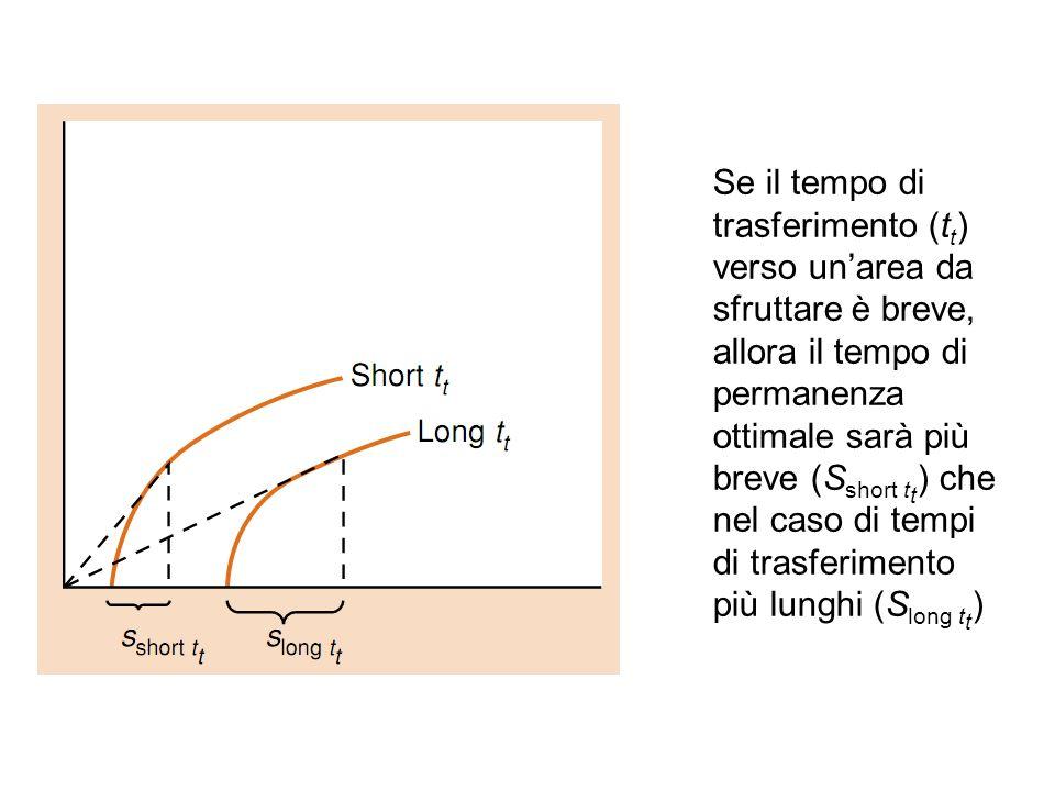 Se il tempo di trasferimento (tt) verso un'area da sfruttare è breve, allora il tempo di permanenza ottimale sarà più breve (Sshort tt) che nel caso di tempi di trasferimento più lunghi (Slong tt)