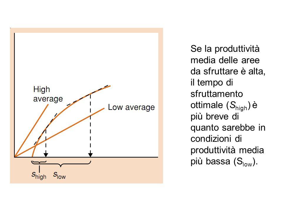 Se la produttività media delle aree da sfruttare è alta, il tempo di sfruttamento ottimale (Shigh) è più breve di quanto sarebbe in condizioni di produttività media più bassa (Slow).