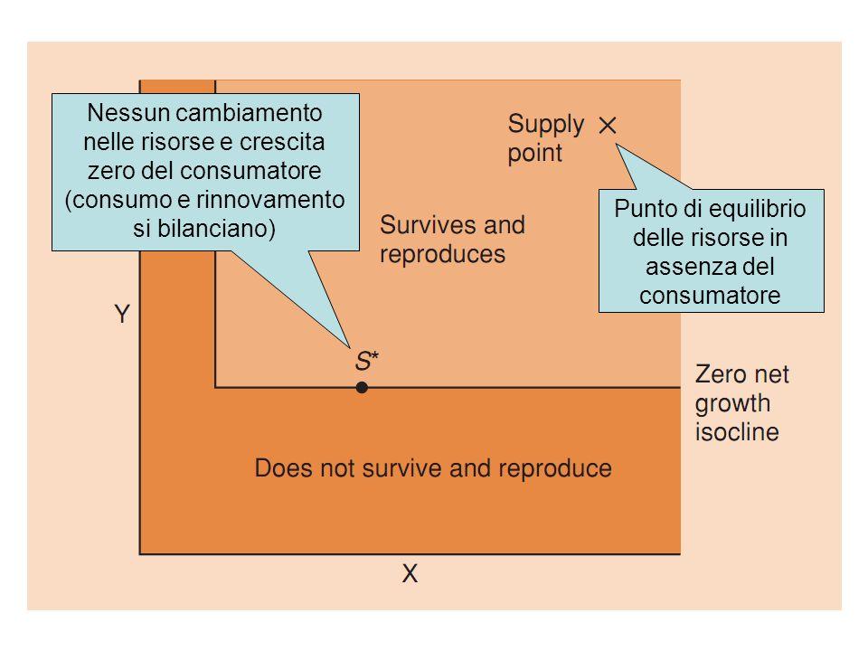 Punto di equilibrio delle risorse in assenza del consumatore